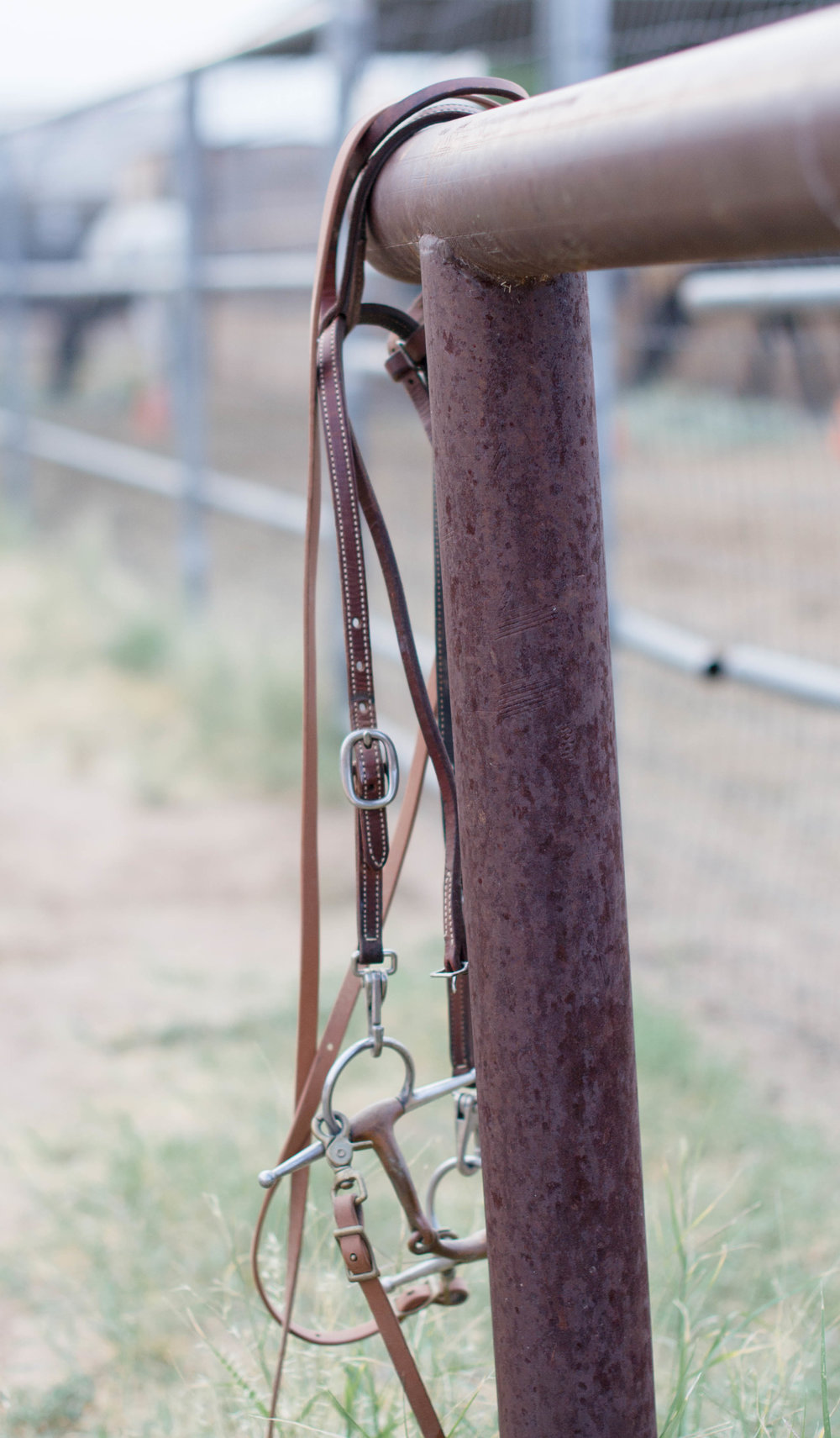 bridle_stock_arizona.jpg