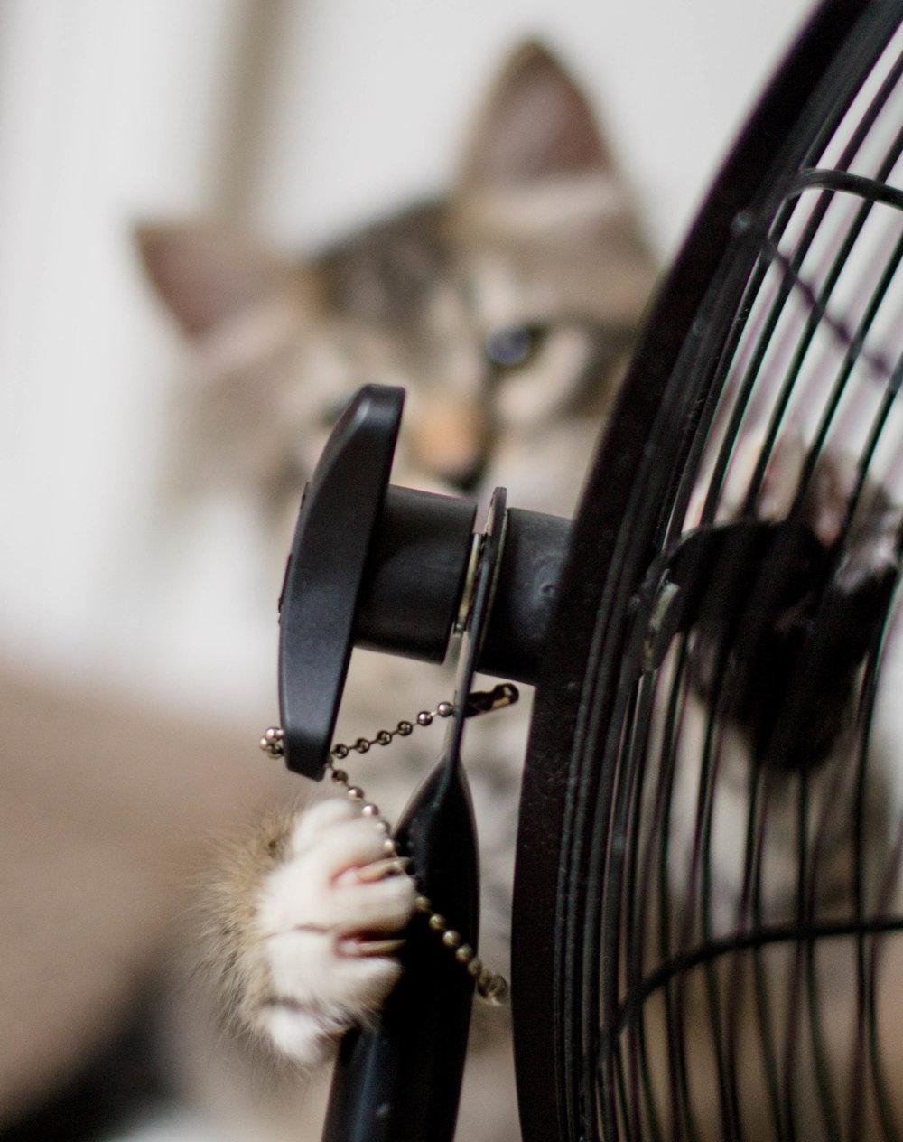cute_kitten_longhaired6.jpg