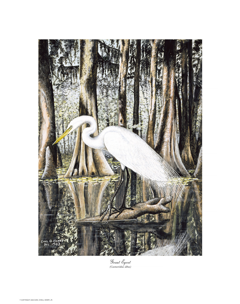 WATER and SWAMP BIRDS
