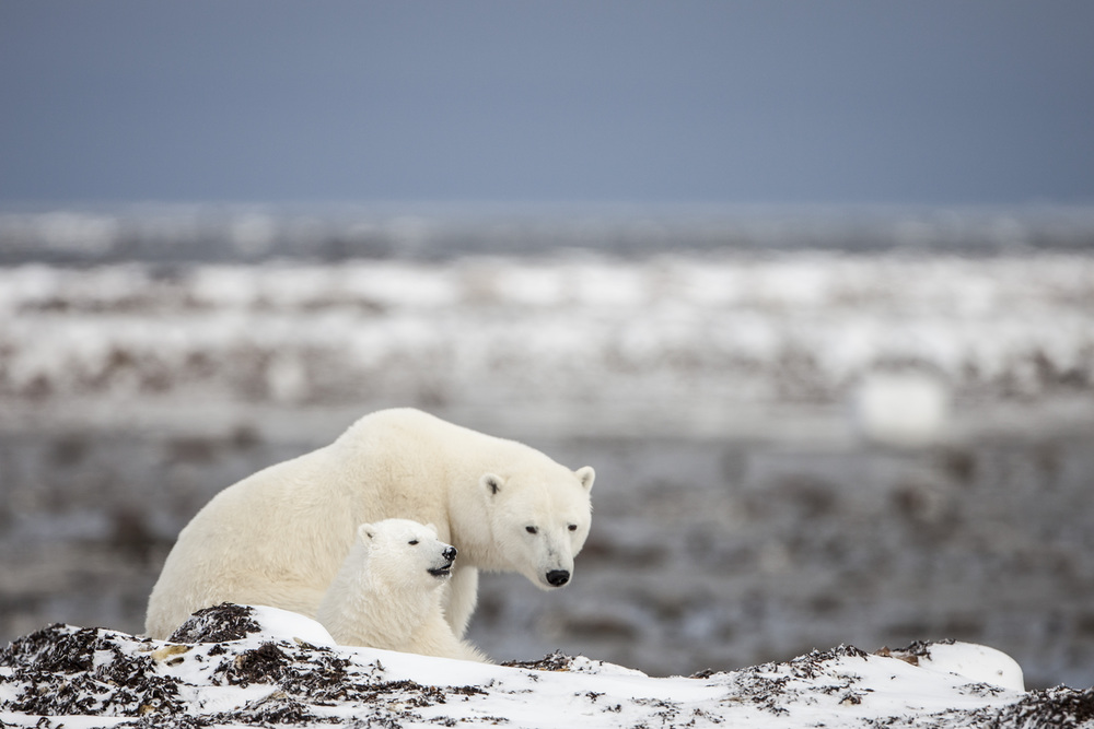 Polar_Bears_Fun.jpg