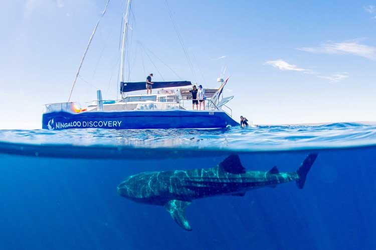Swim+with+whale+sharks_Ninagloo+Discovery+(1).jpg