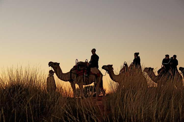 Uluru+Camel+Tours.jpg