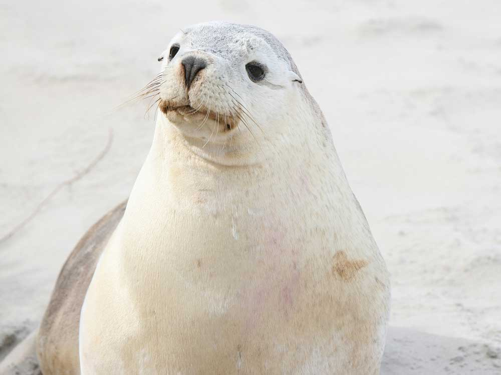Baby-Sea-Lion.jpg