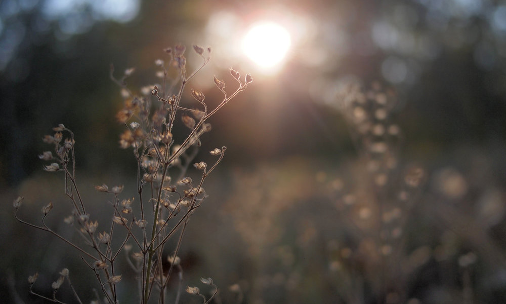 Meadow3.jpg