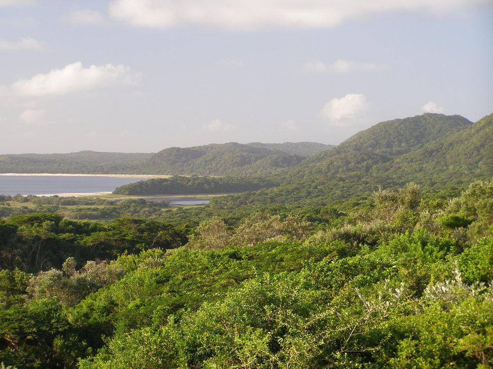 Indian Ocean coastal dune forest at Cape Vidal, Eastern Shores, KwaZulu-Natal, South Africa. Photo: M.J. Lawes