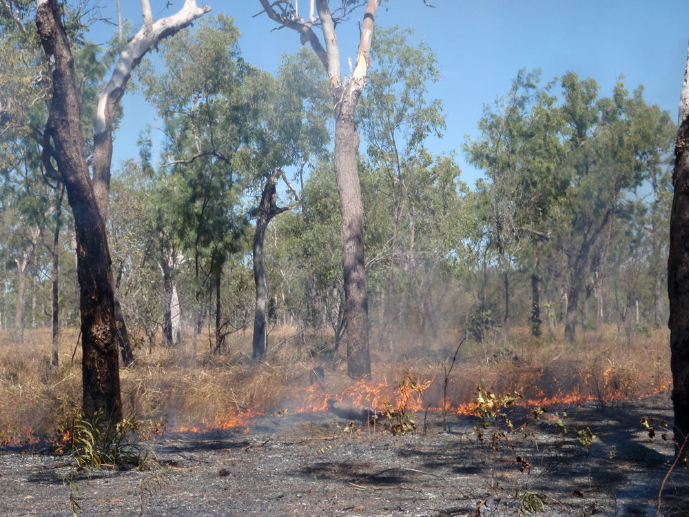 Typical surface fire in Litchfield National Park, NT, Australia. Photo: M.J. Lawes