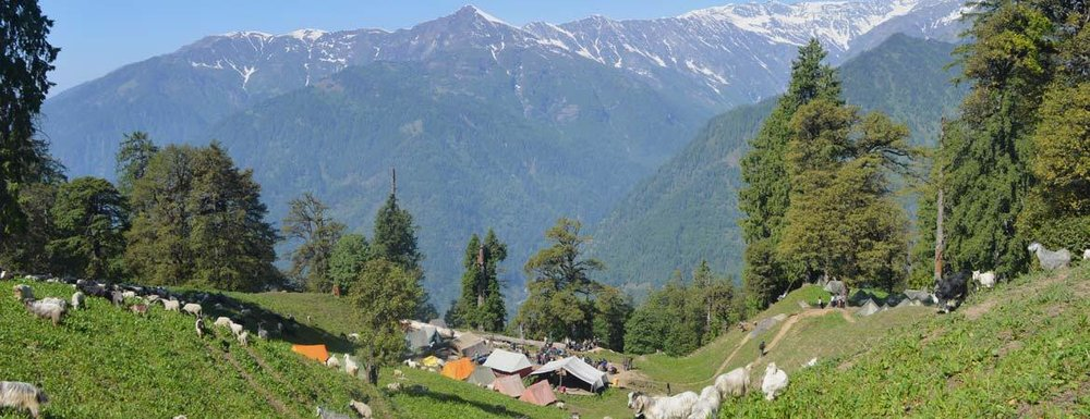 Our Basecamp Above Vashisht