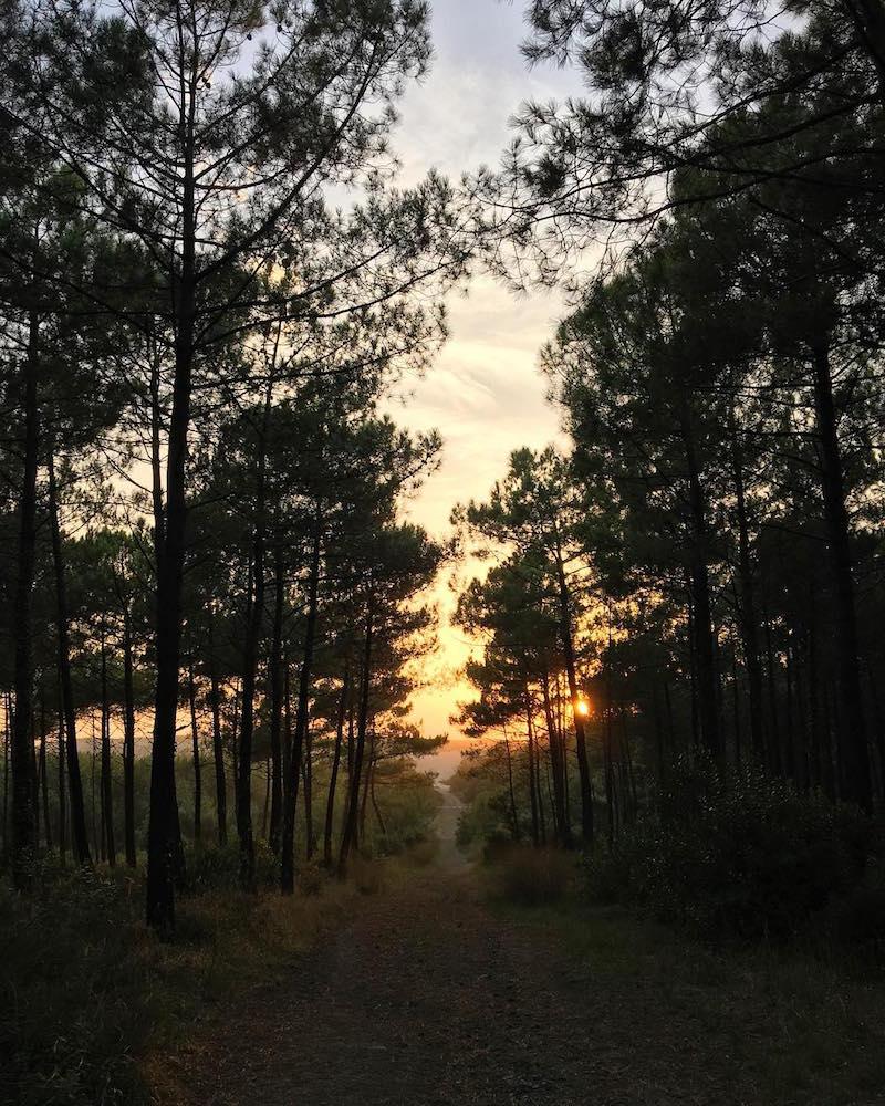 Forêt_Landes
