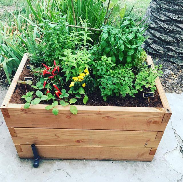 L'été se prolonge et notre potager est toujours plein de vie! ☀️🌿🌈🌾🌸🌼 #hautpotager #potager #fruit #legumes #herbes #bio #organic #healthy #healthyfood #sun