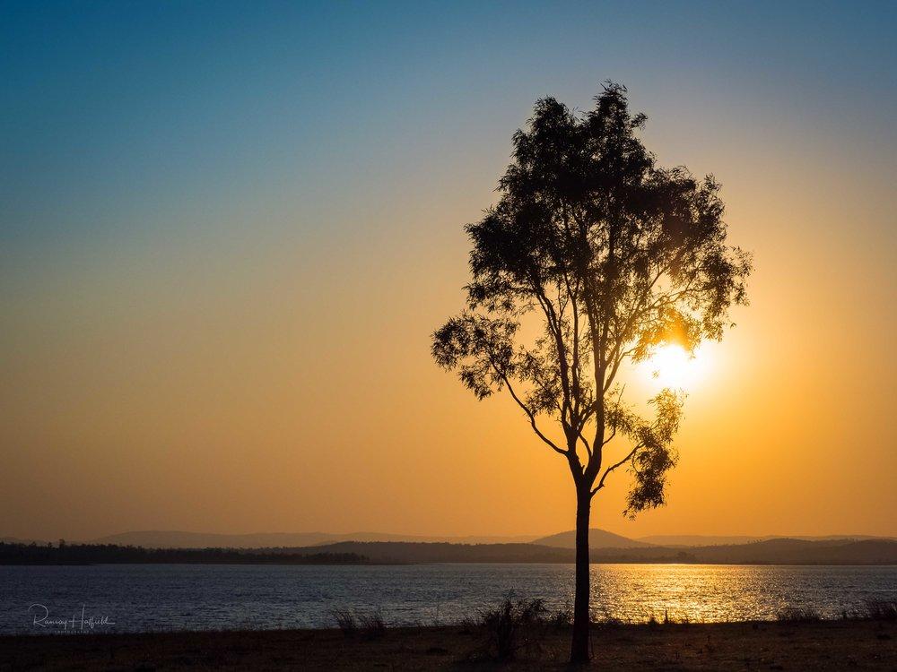 Gumtrees and Australian Light