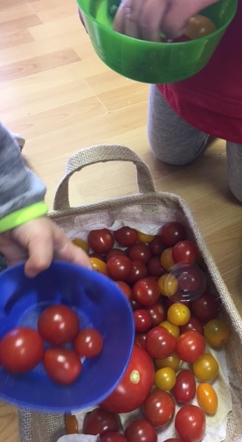 tomato fun.JPG
