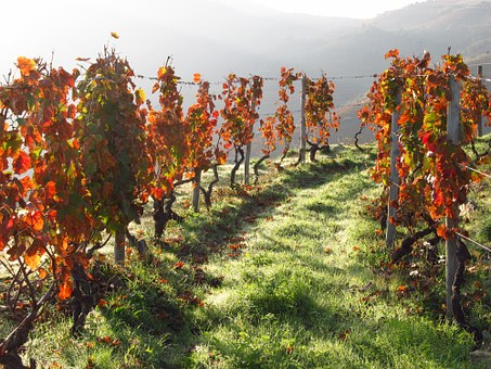Douro vineyard.jpg