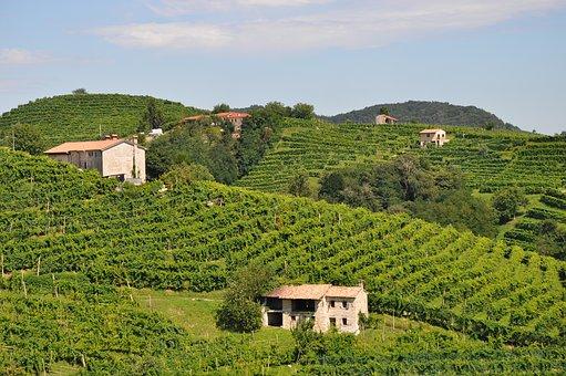 italian vineyard wine-2519969__340.jpg