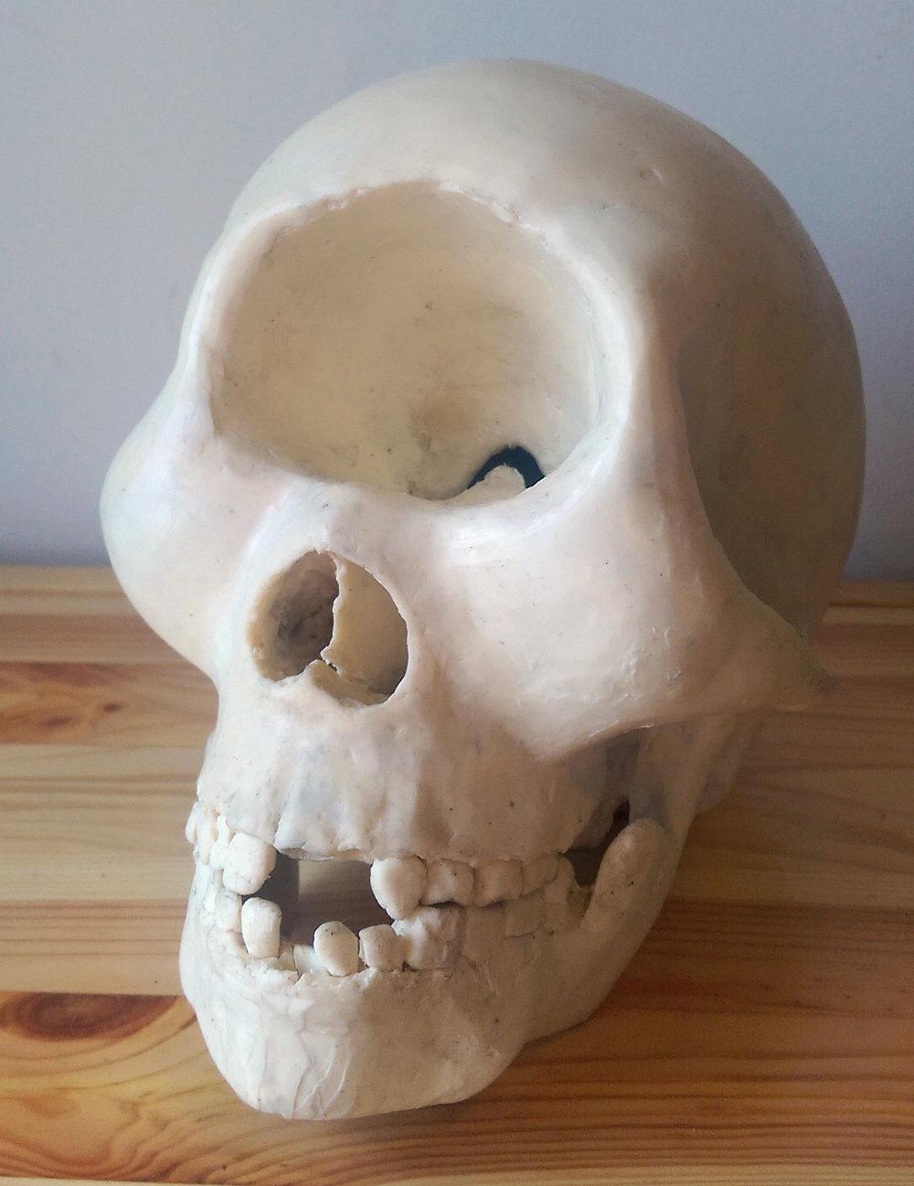 cyclopse skull.jpg