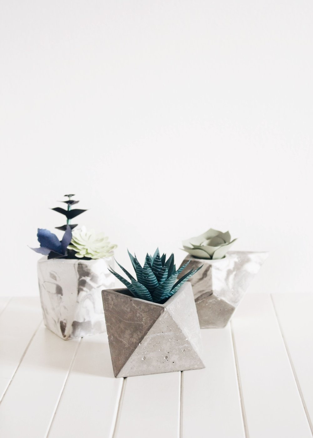 paper-succulents.jpg