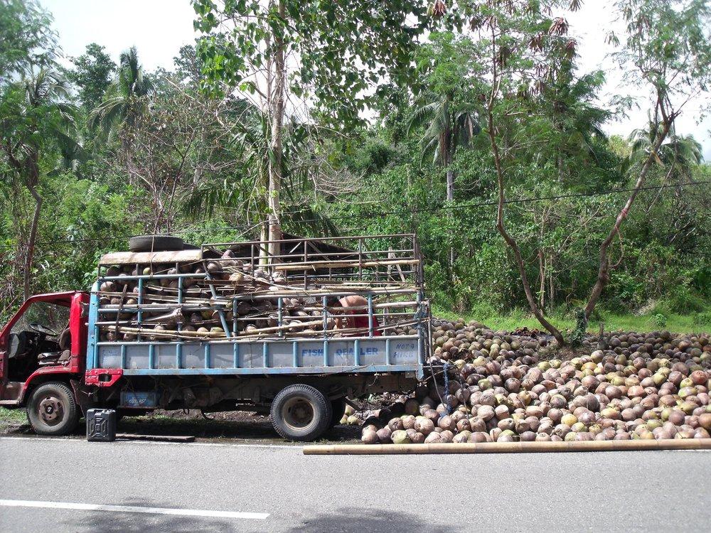 Coconut trader
