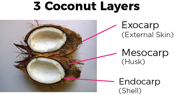 CoconutLayers.png
