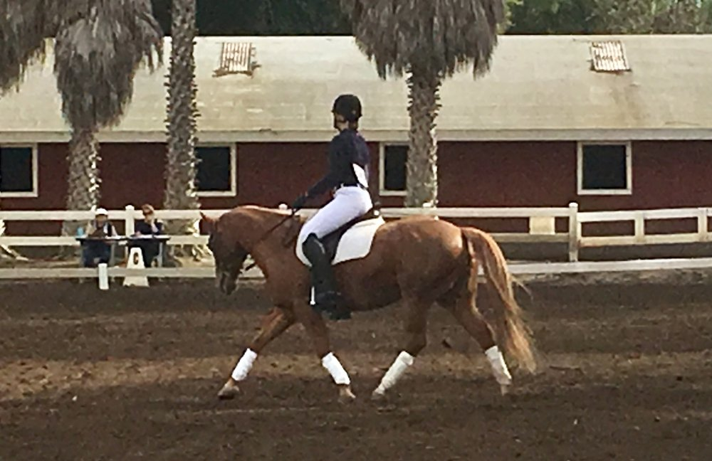 Katelin Garbani and Pippa Longstockings win their First Level Test 1 class at the ECEF Benefit Dressage Show.