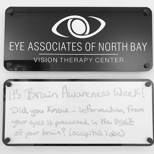 Did you know?! @eyeassociatesofnorthbay has their VISION THERAPY CENTRE here at 176 Lakeshore Drive in #northbay #coworkingspace #brainawarenessweek #ontario 🧠👀