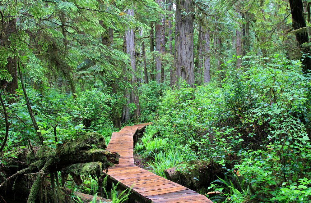 rainforest-2048447.jpg