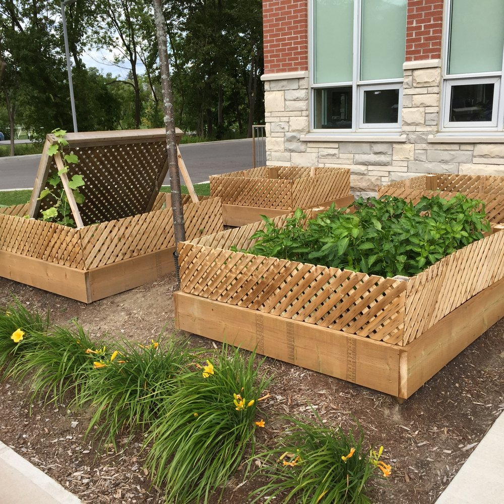 Learn about our Veggie Beds -