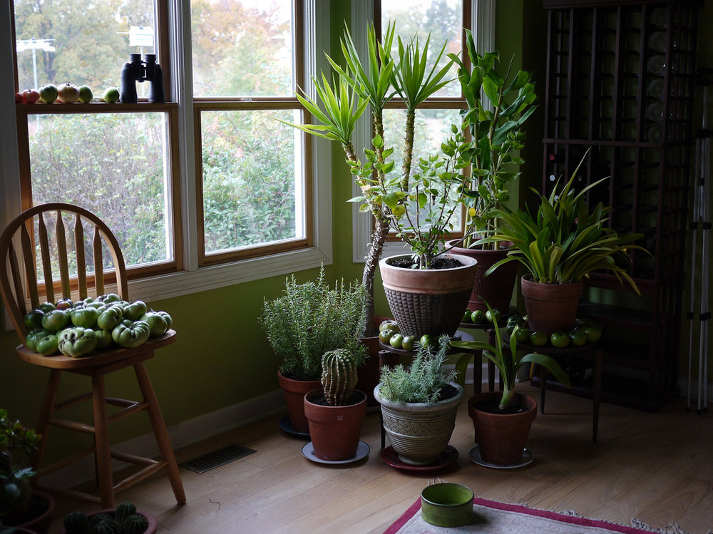 houseplants 2.jpg