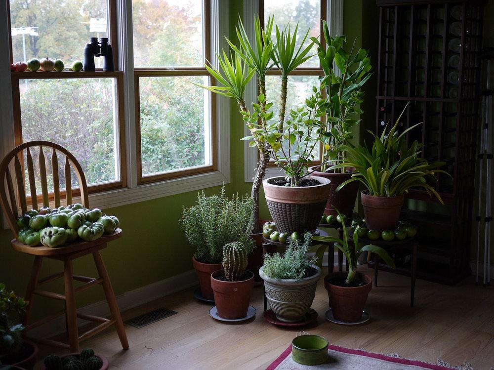 houseplants 2.jpg