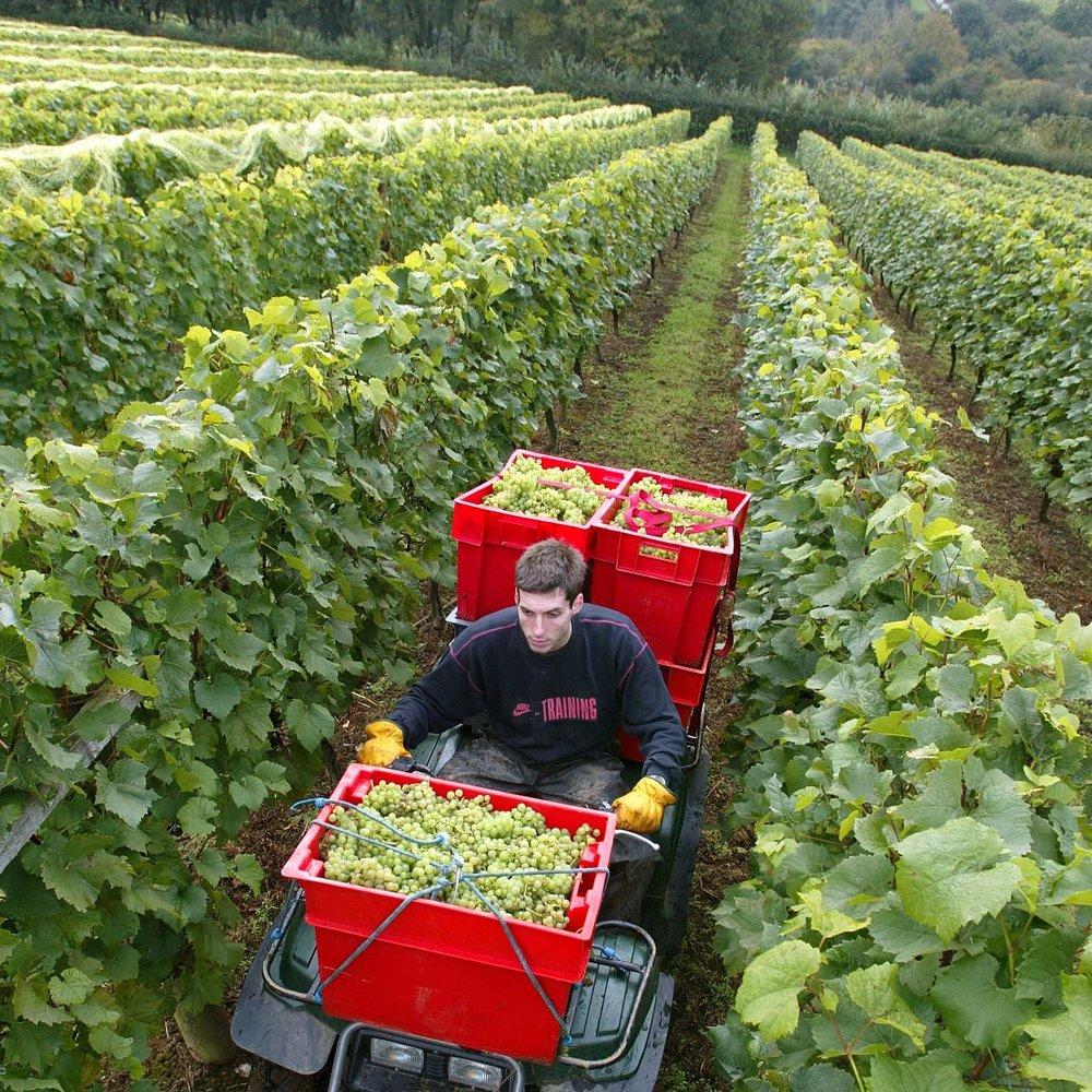 The Vineyard -
