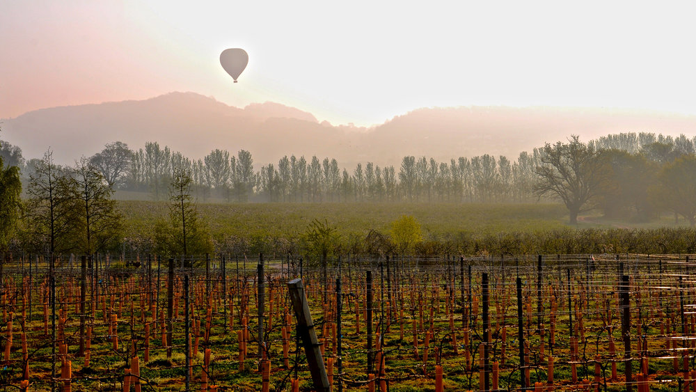 Hot Air Balloon over vineyard.jpg