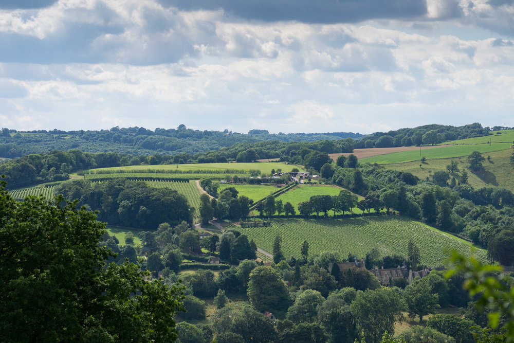 Woodchester vineyard view from Amberley.jpg