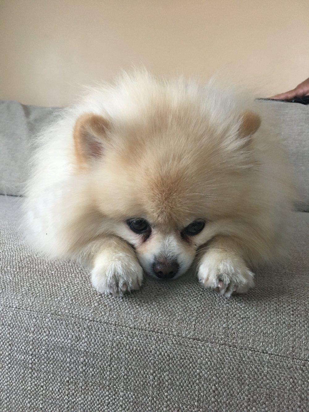 Benson 2 cute.JPG