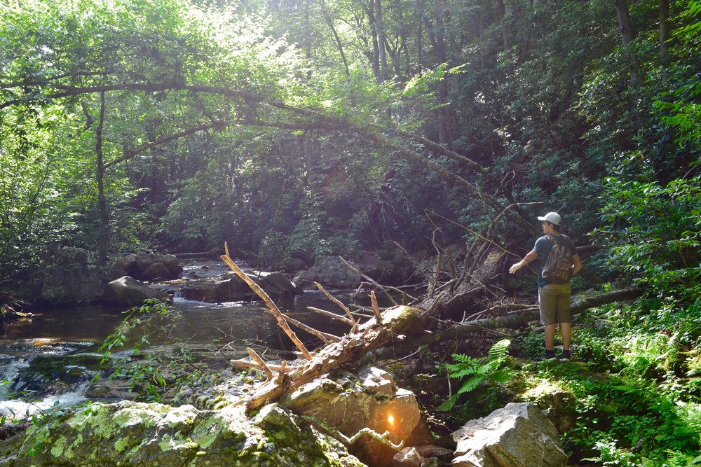 Dillon encountering small stream problems: spooky trout, fallen timber, and difficult casts.