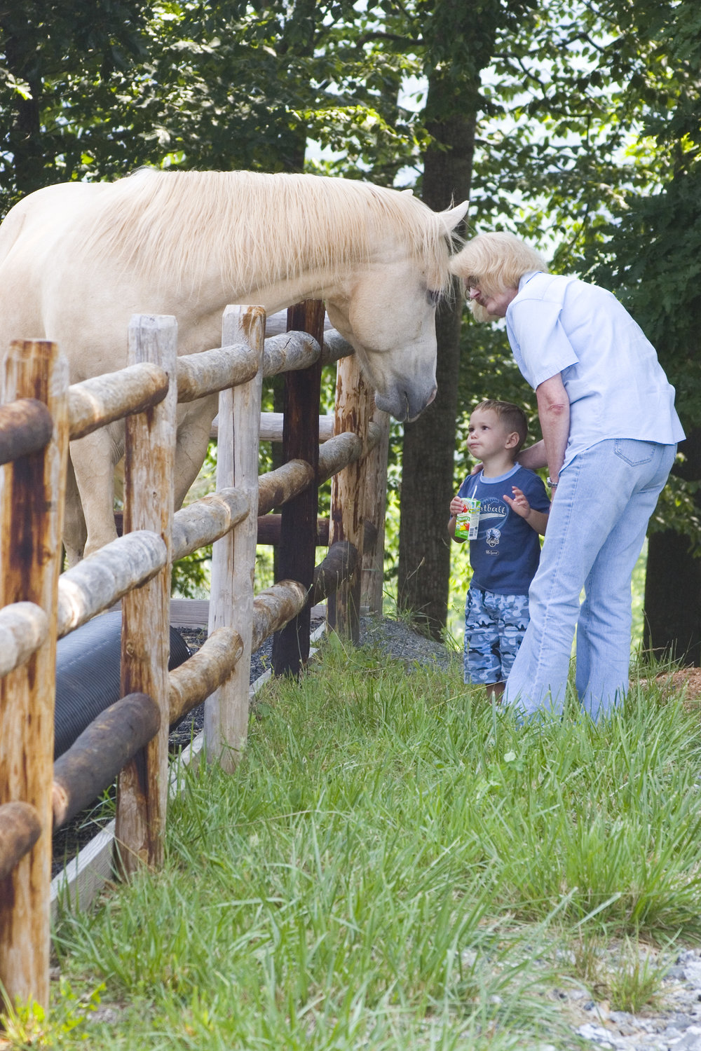Events | Equine Assisted Psychotherapy and Learning | Equine ...
