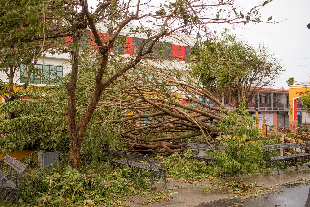 _Real_Life_Hurricane_Maria-31.jpg