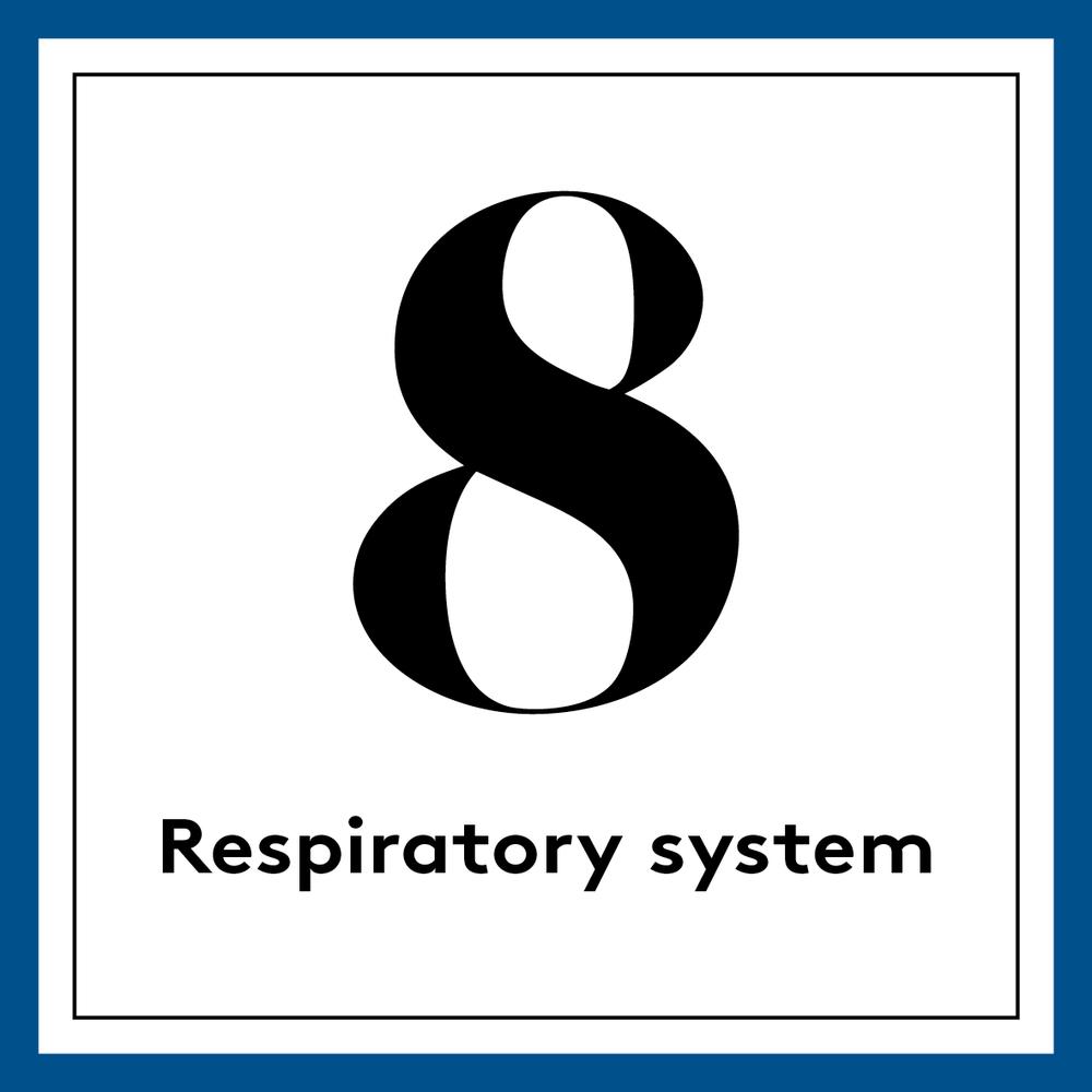 [english] 8. Respiratory system