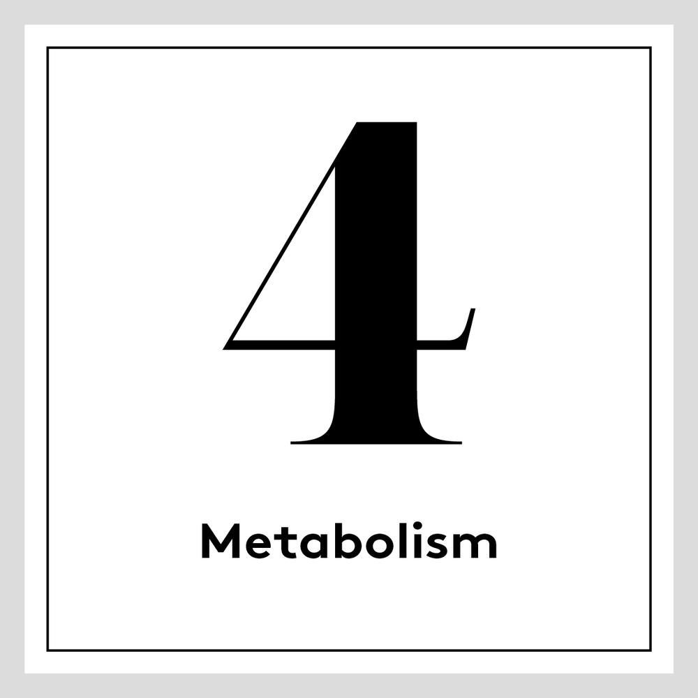 [english] 4. Metabolism
