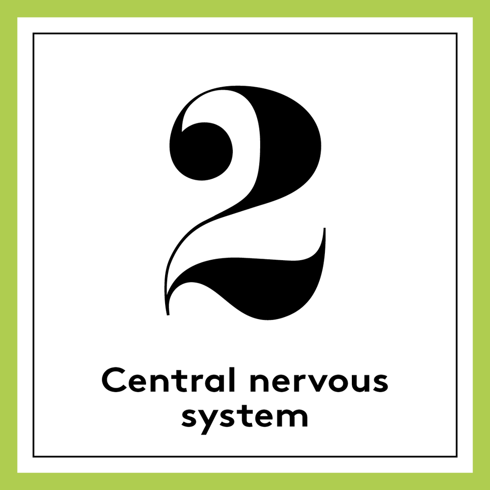 [english] 2. Central nervous system