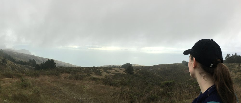 Point Reyes did not offer much of a view due to the fog, but it made for great hiking weather!