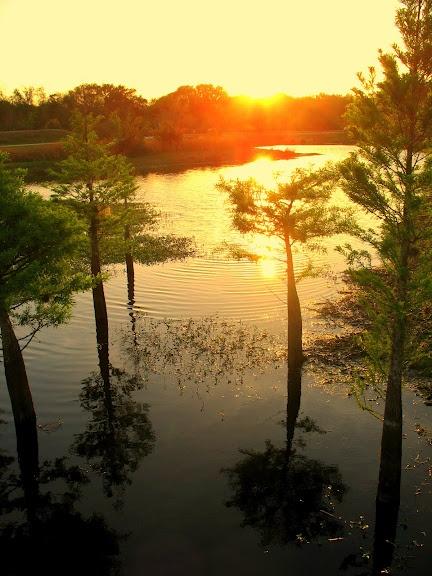 Central Florida Wilderness