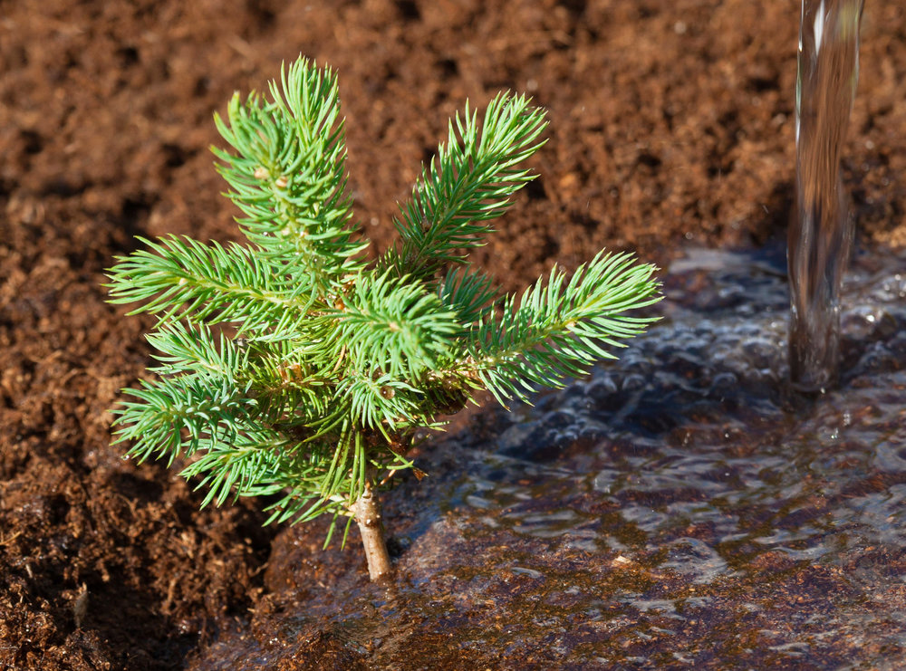 Galbraith Tree Farm will be planting more than 90,000 Firs, Cedars, and Hemlocks during 2018.