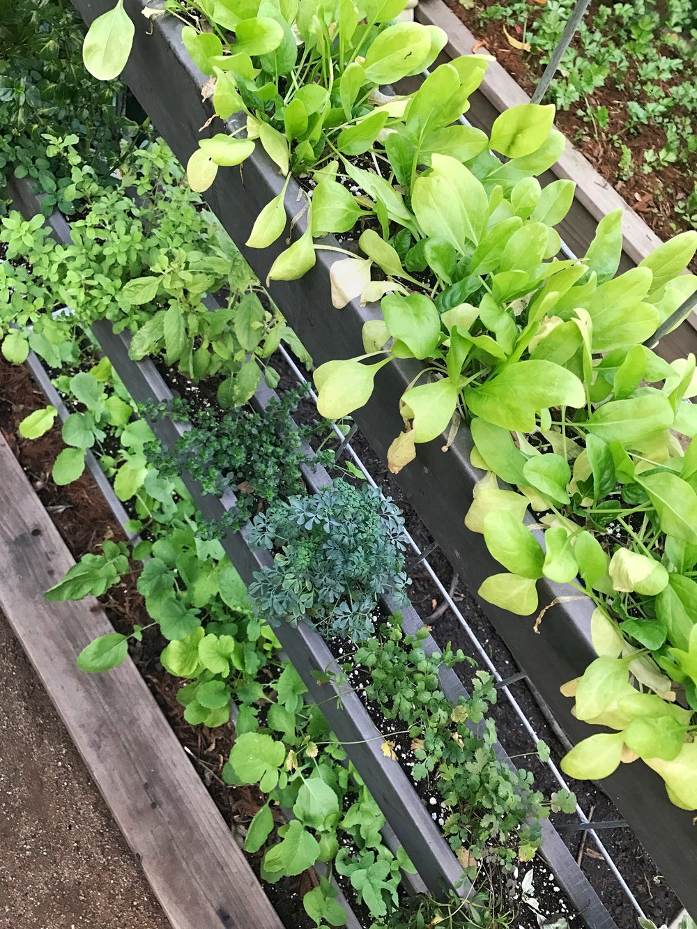 - Rain Gutter Planters work very well for growing shallow-rooted fruits and vegetables in while utilizing vertical space on a fence, balcony, wall, or trellis. Please see our YouTube video for an instructional guide and comment on the video with any questions.