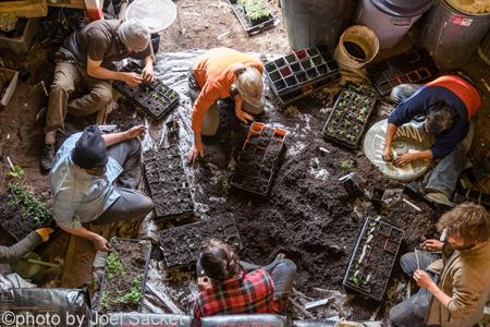 farm interns  with seedlings, bainbrige island photo