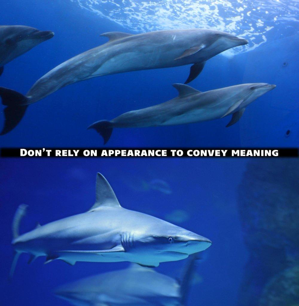 dolphin-shark-appearance.jpg
