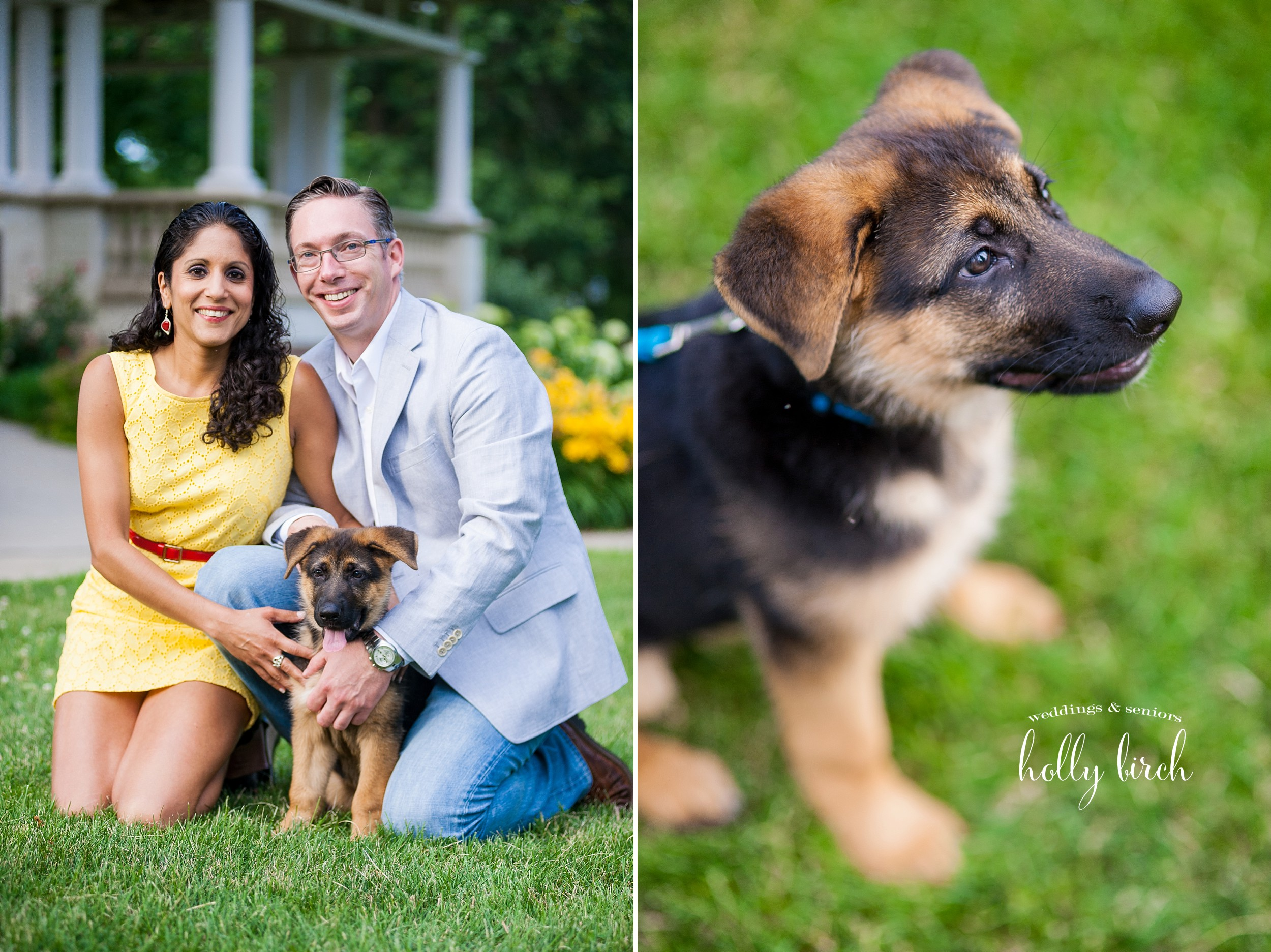 German shepherd puppy engagement session