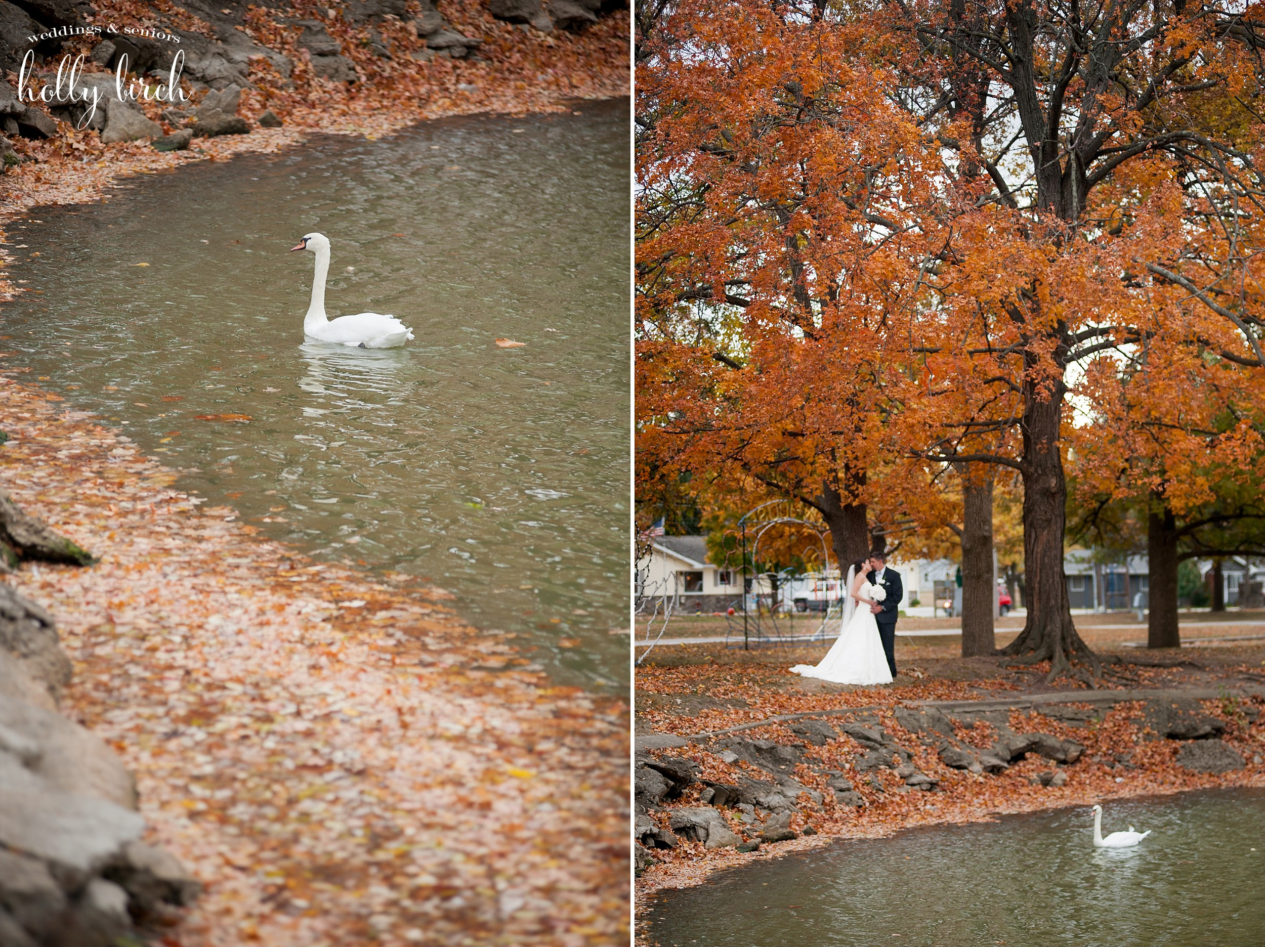 wedding swan picture