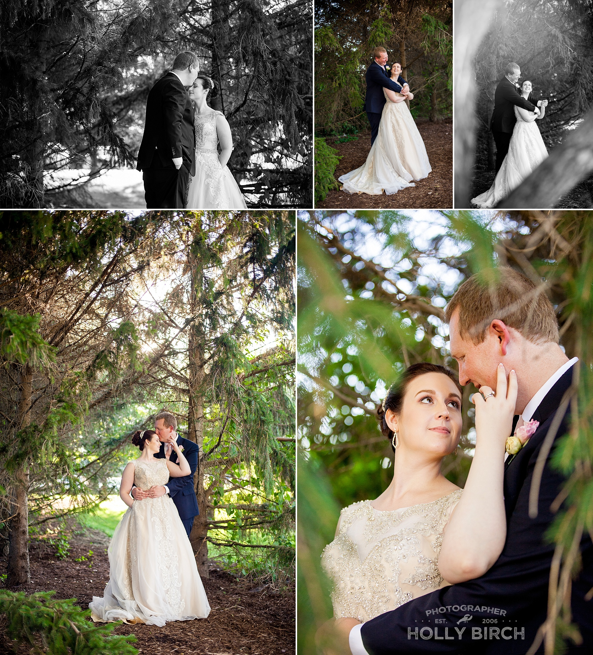 bride and groom underneath evergreen trees