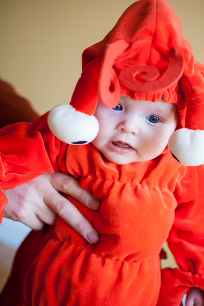 6 month Carter's lobster costume