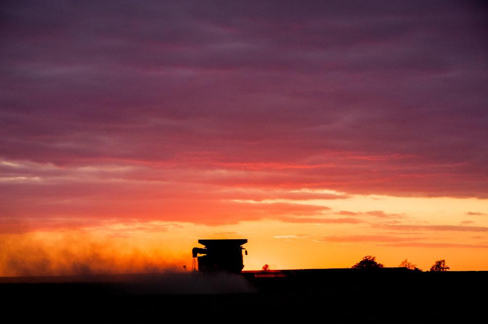 combine harvest sunset