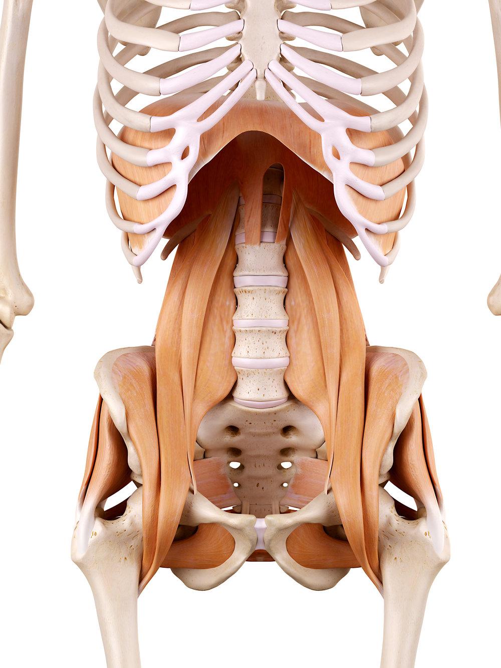 psoas muscles.jpg