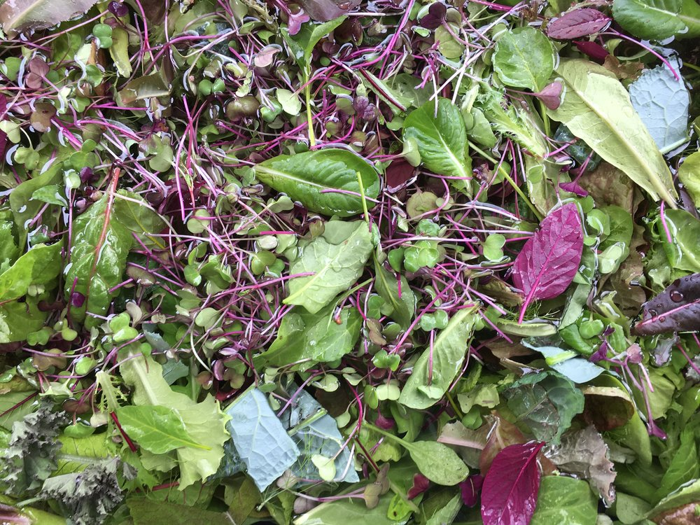 SEASONAL SALAD MIX